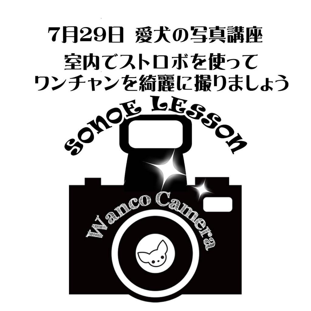 ストロボレッスンのお知らせ【わんちゃん】
