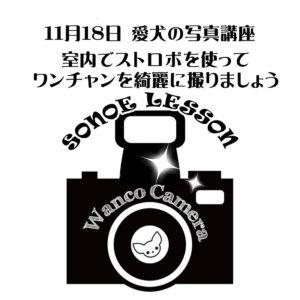 11月ストロボレッスンのお知らせ【わんちゃん】