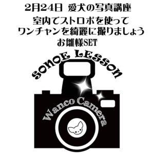 2月ストロボレッスンのお知らせ【わんちゃん】
