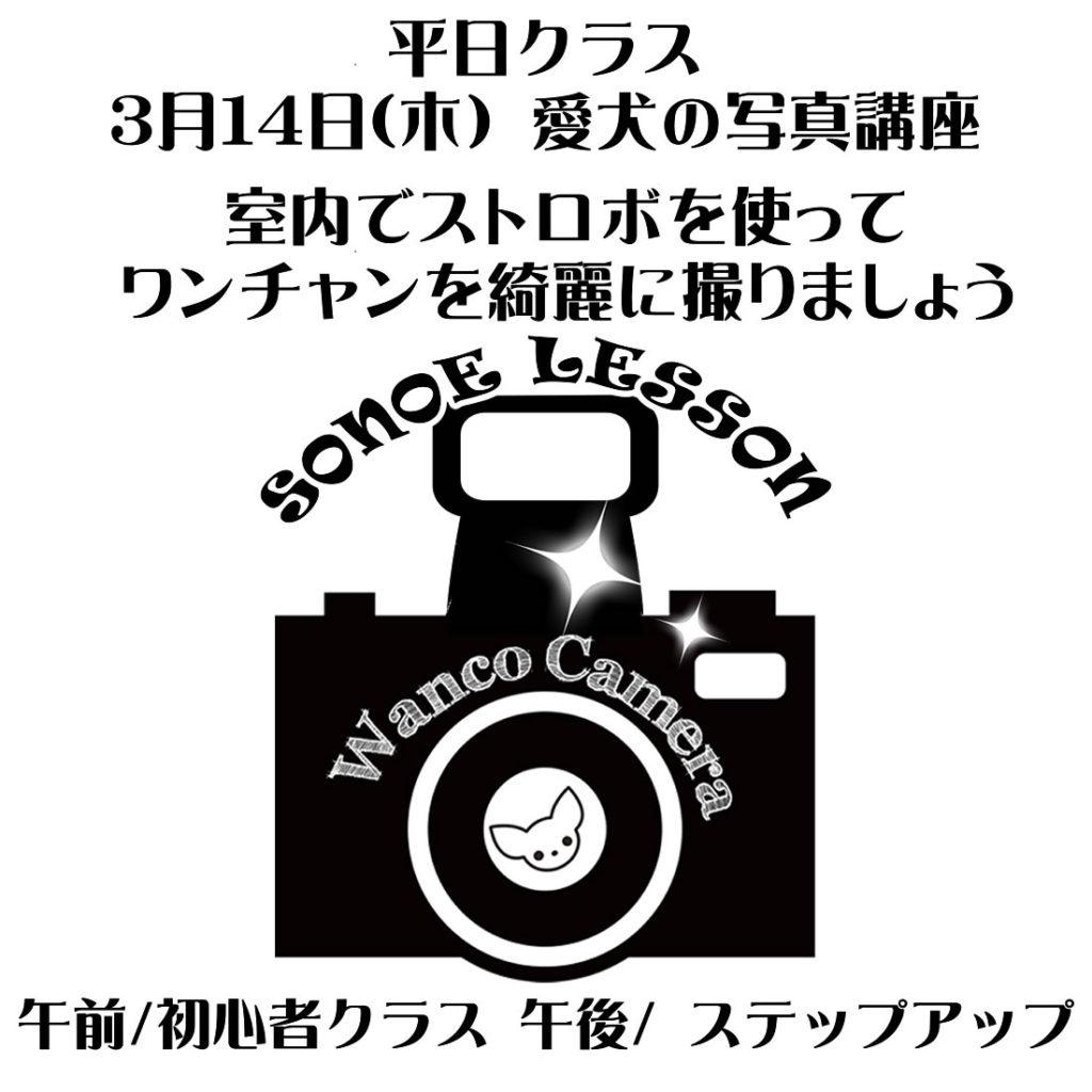 3月のストロボレッスン【平日クラス】のお知らせ